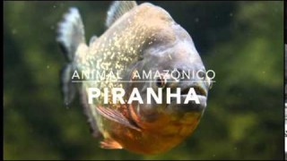 Piranha – 1º Trimestral 2016